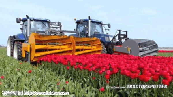 农民都改种郁金香了,这是想把整个荷兰变成库肯霍夫公园的节奏啊