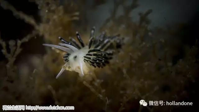 荷兰北海的海底是如此地神奇,专家们都惊异了!