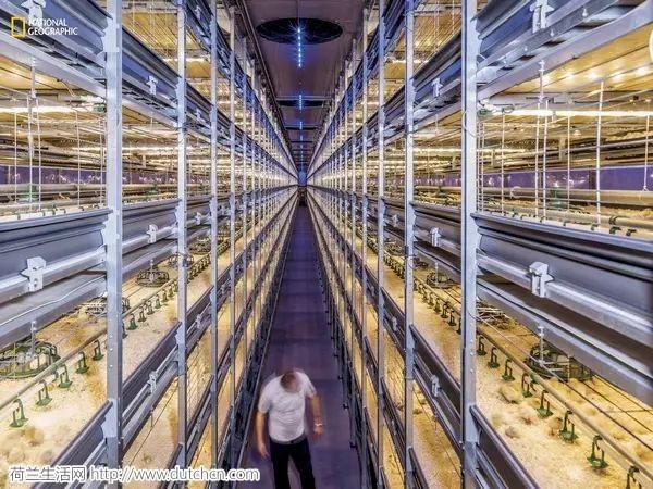 信不信由你,荷兰是世界第二大食品出口国