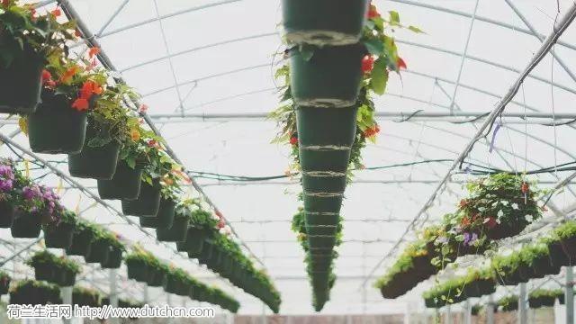 弹丸小国,喂饱世界:这才是未来农业的模样!