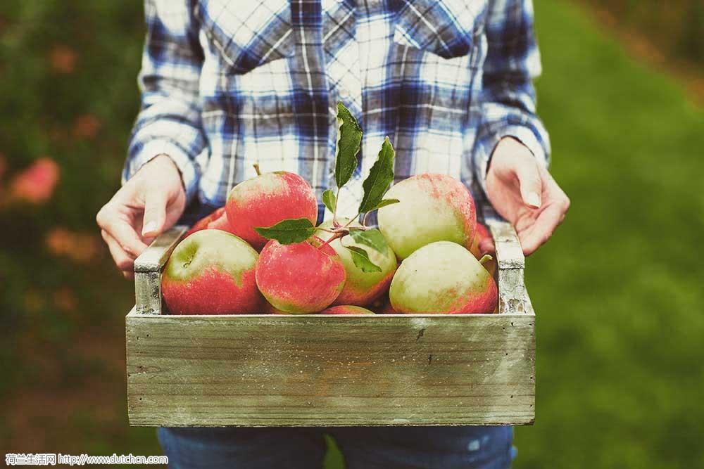 mijn_keukentuintje_appel.jpg