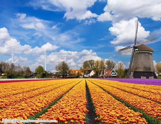 荷兰是继美国之后的第二大农产品出口国