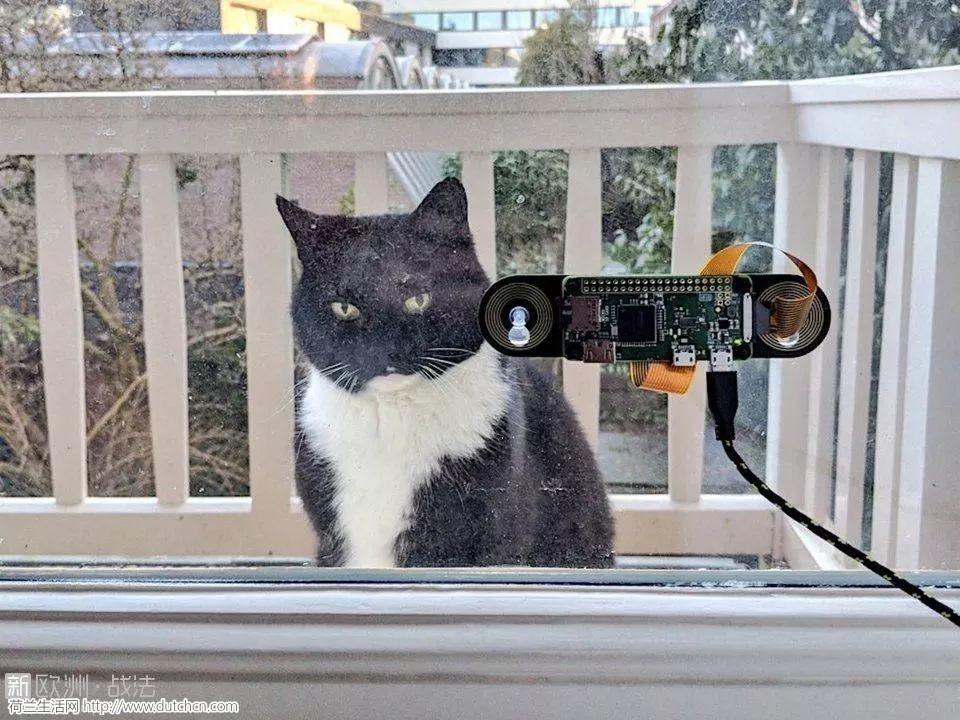 暖心!为了不让猫主子久等,荷兰小哥哥打造喵の黑科技…