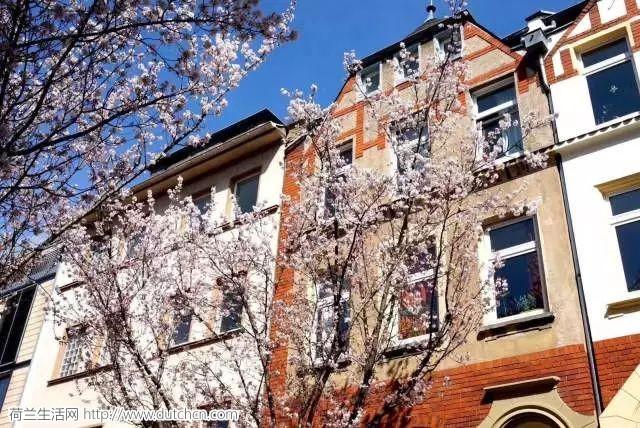生活网和50个小伙伴打卡德国浪漫樱花!原来这才是欧洲最美的神话