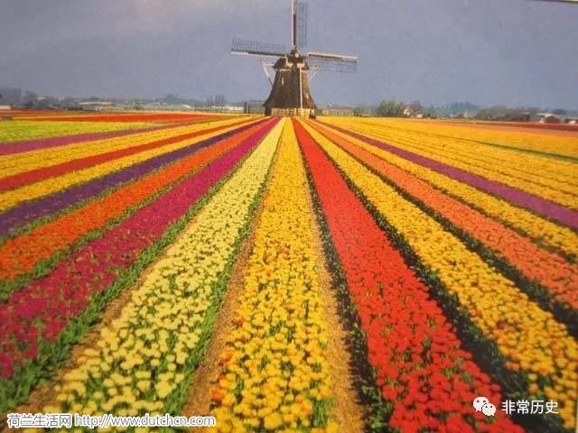 荷兰郁金香有多疯狂?竟然导致世界头号帝国的衰落!