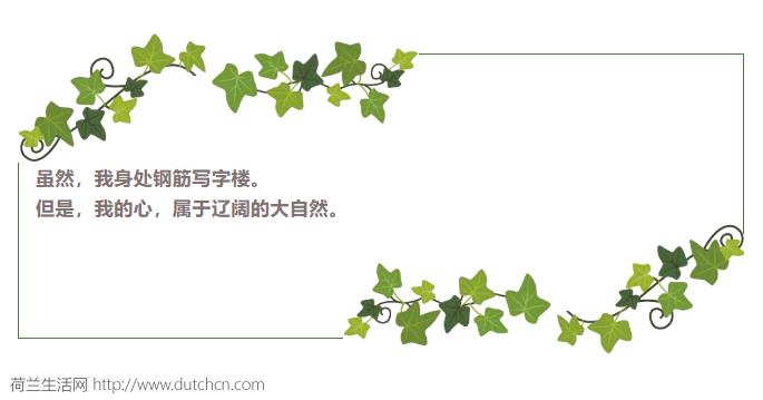 """""""荷兰威尼斯""""每年要承受多少中国人的宠幸?荷兰人给出了这样的大数据"""
