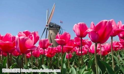 """揭秘:离开荷兰,赶""""归国潮""""的华人们,最后都怎么样了?"""