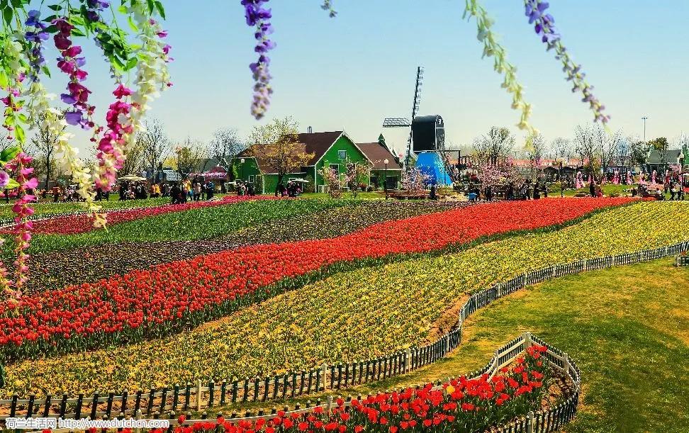 荷兰,今天向全世界发出一封邀请: 想要带你去鲜花王国!