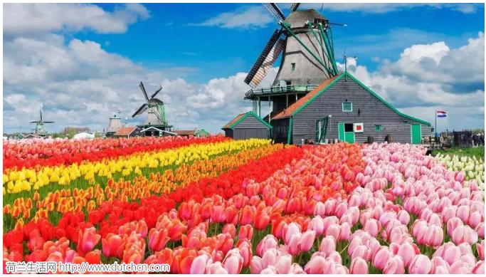 中国总理时隔14年再次出访荷兰,这些中荷情况你需要了解