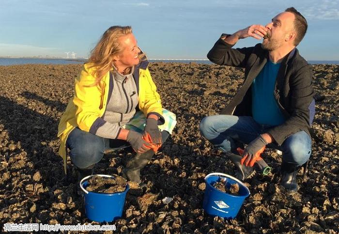 荷兰将禁止个人挖生蚝?不,政府考虑的是如何扩大范围