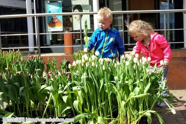 tulips_005.jpg