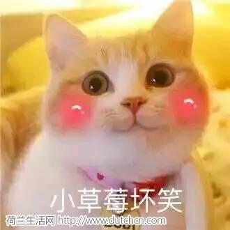 小草莓坏笑.jpg