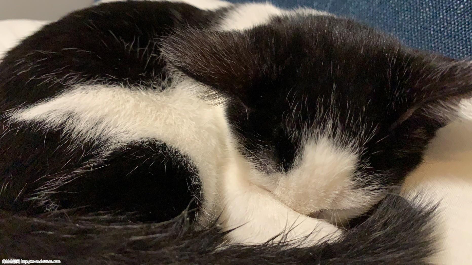 转让一只三个月的小奶猫