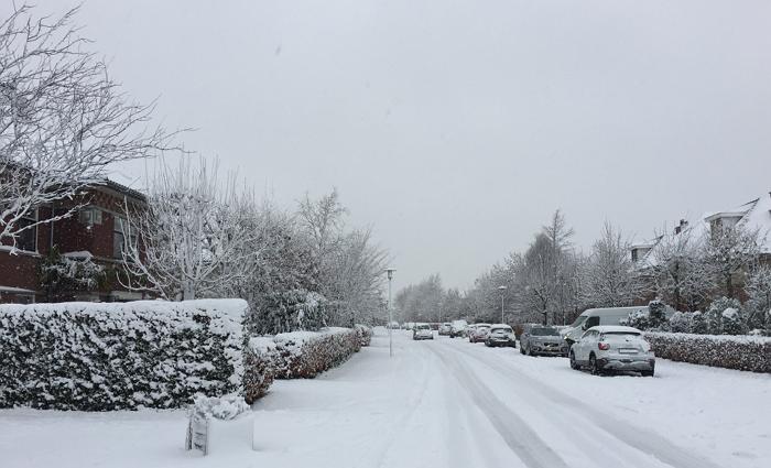 没有冰,没有雪,我们刚刚经历了一个假的荷兰冬天,月底可能有雪?