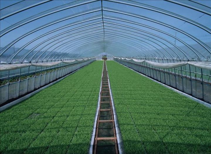 荷兰农业为何能够创造奇迹