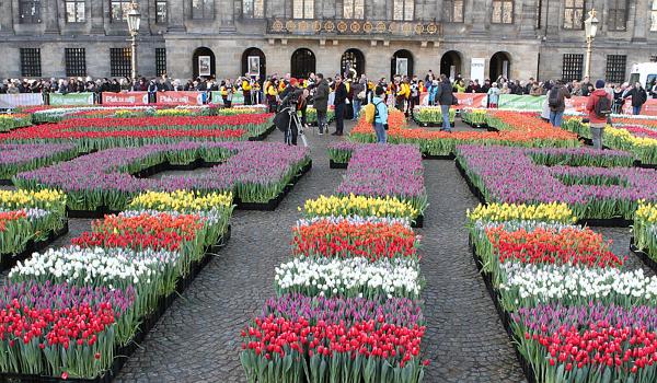 再等2天!荷兰国家郁金香日,20万朵郁金香免费等你摘!