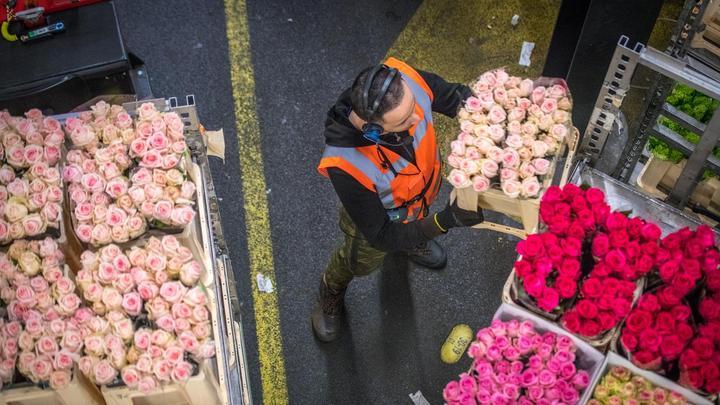 2019年荷兰花卉出口价值62亿欧元,再创历史新高
