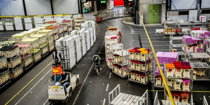 荷兰农产品出口创历史新高,出口中国猪肉奶粉大幅增加