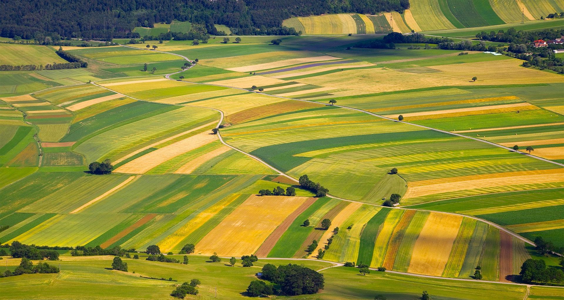 荷兰的耕地.jpg
