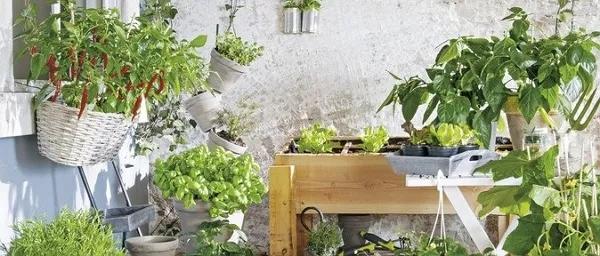 在家憋疯了?咱们一起种菜吧!菜种子哪里买?进来看
