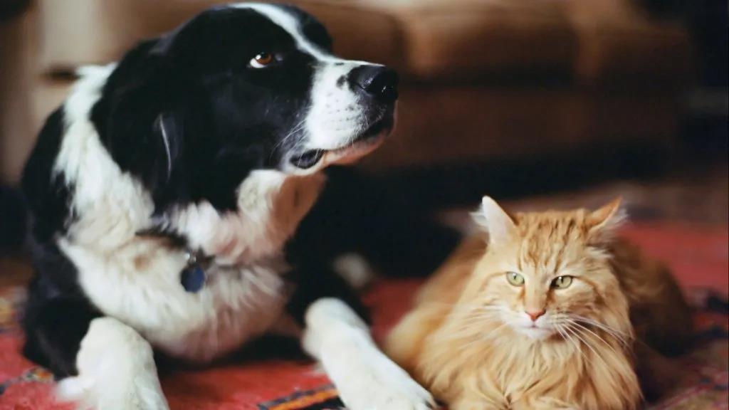 荷兰有猫狗被感染新冠病毒!动物会传人?我们应该怎么做?
