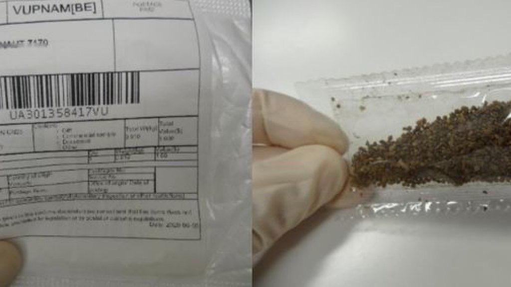 欧洲多国居民收到不明植物种子,荷兰安全机构:收到立刻上报