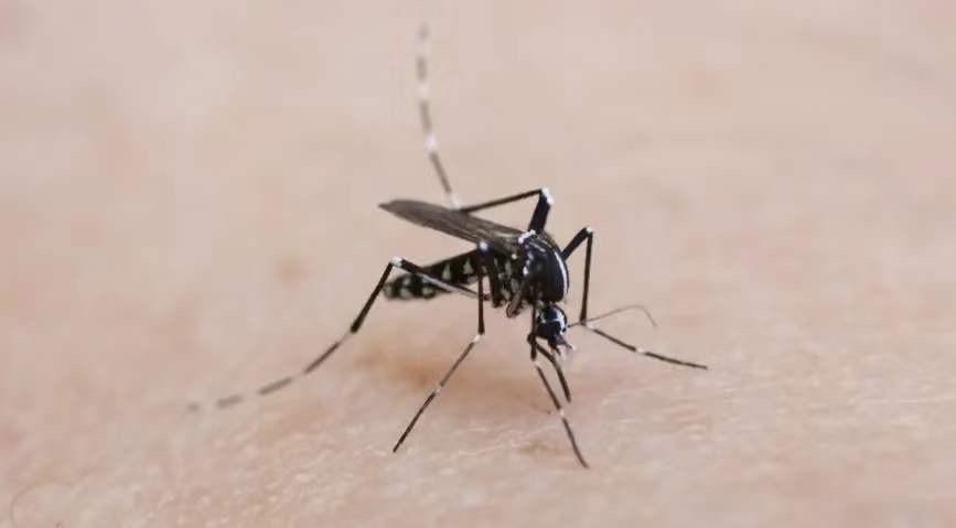 小心!可蚊虫传播的新型病毒已进入西欧,荷兰发现首例感染