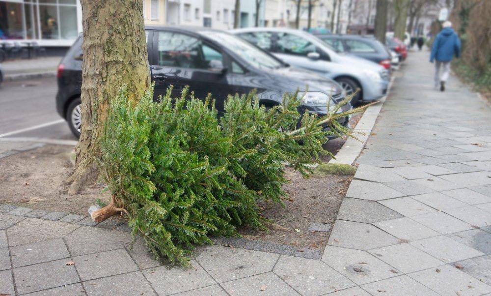 家里的圣诞树该如何处理?荷兰人是这样做的,你做对了吗?