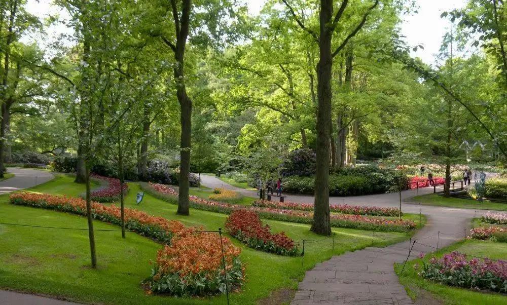 荷兰库肯霍夫郁金香花园开放被叫停,今年开门仍存在可能?