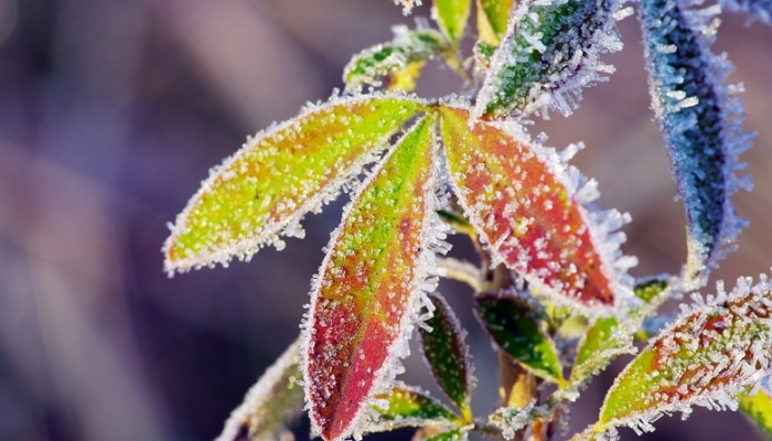 今年荷兰的第一个霜冻来了,但是这个周末的气温将达到20度