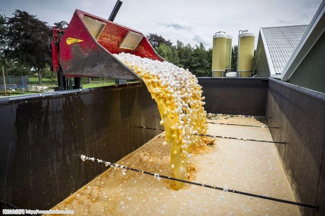荷兰毒鸡蛋风波后遗症,家禽养殖户起诉政府索偿